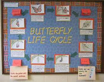 Check out my NEW interactive butterfly bulletin board.