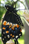 butterfly photo butterfly stages 8