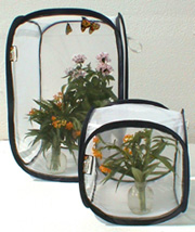 monarch caterpillar cages