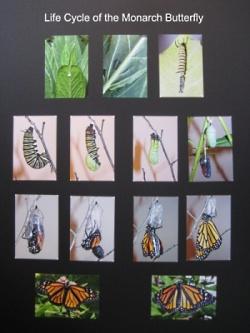 easy butterfly bulletin board