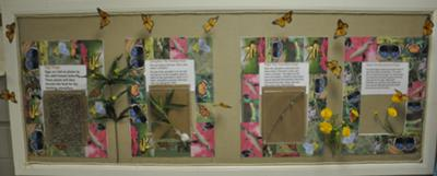 BUTTERFLY LIFE STAGES LIVING BULLETIN BOARD