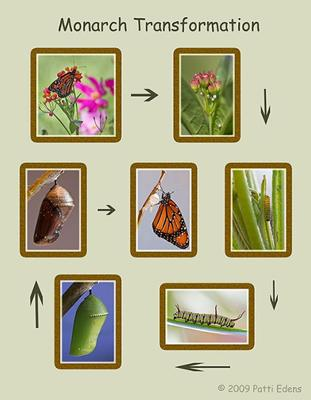 Monarch Transformation