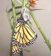 butterfly lesson plans