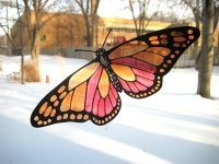 Butterfly Transparency