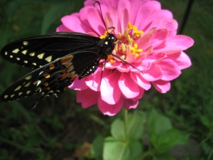 Butterfly Food!