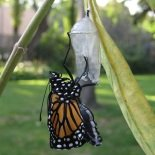 monarch butterfly life cycle movie