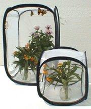 caterpillar cages